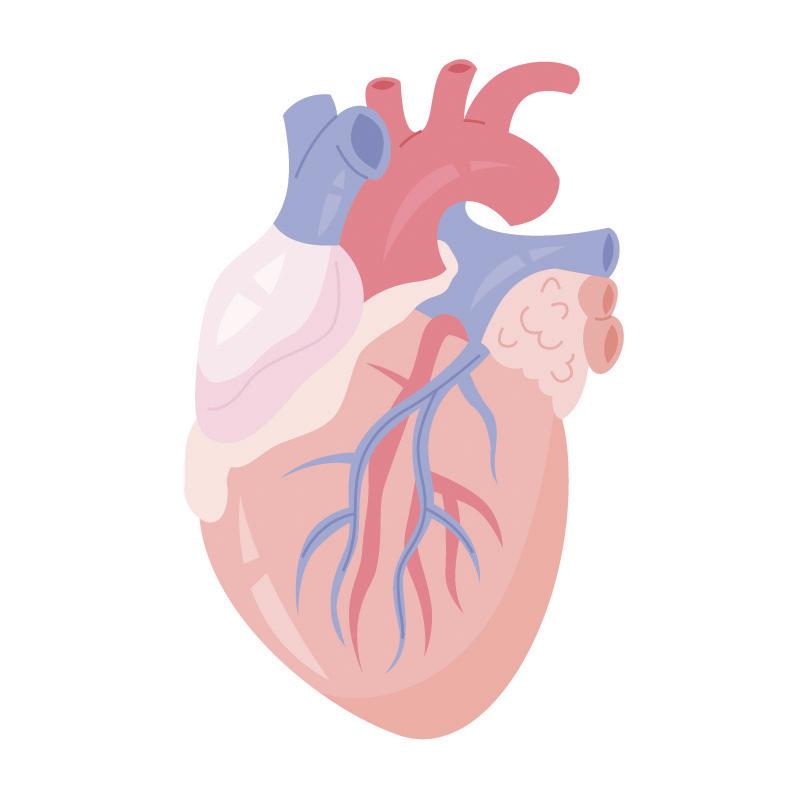 miażdżyca cholesterol a dieta keto wysokotłuszczowa ketogeniczna jadietetyk